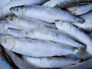 Fish in large quantity