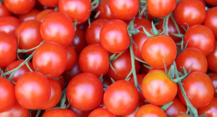 Tomatoes in bulk