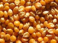 Maize required in large quantity in Ibadan